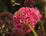 Gartenbaumesse Blume