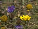 Blumenwiese Herbst