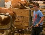 Kuhhaltung, Laufstall, Muttertierhaltung