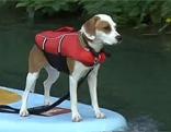 Stand Up Paddeln Yoga Hunde