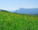 Landschaft Bergheim