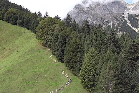 """Riesenbäume im """"Lammertaler Urwald"""" in St. Martin am Tennengebirge (Pongau)"""