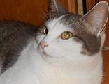 Katze Minka in Itzling abgängig