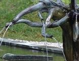 Heilwasserquelle St. Jakob