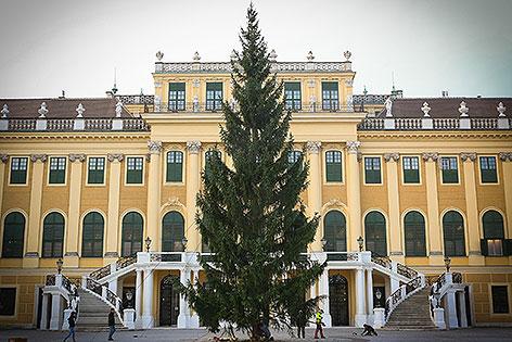 Weihnachtsbaum vor dem Schloss Schönbrunn wird aufgestellt