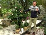 Karl Ploberger mit Weihnachtsbaum und Lichterkette