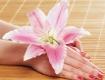 schöne Hände und Blume