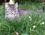 Katze Maxi Tiersuche