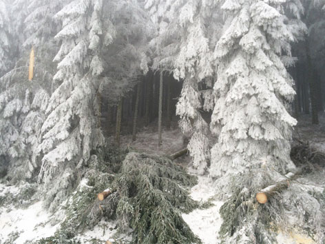 Raureif auf Bäumen