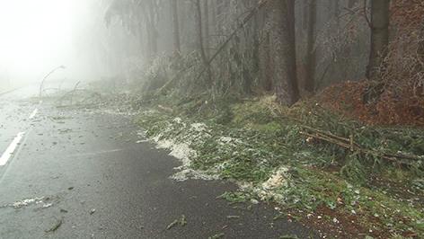 Umgestürzter Baum auf Straße