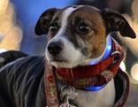 Kleiner Hund mit Mantel in der Stadt