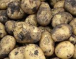 Kartoffel Erdäpfel