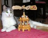 Katze mit Karussell
