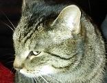 Katze Cleopatra Cleo