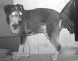 Streuner und Mischlingshund Max gesucht