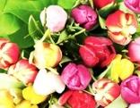Blumenstrauß mit Tulpen