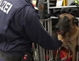 Polizei Diensthund Suchhund Polizeihund Drogenhund Hund