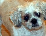 Hund aus Lichtschacht gerettet