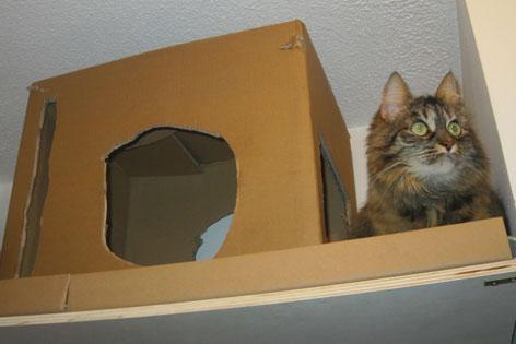 Katze neben einer Katzenhöhle aus Karton
