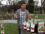 Fernsehgärtner Karl Ploberger mit verschiedenen Beerensorten zum Pflanzen.