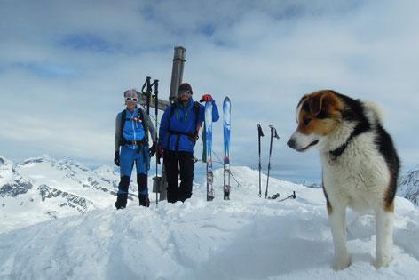 Hund auf Gipfel