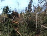 Sturmschäden in Stuhlfelden