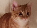 Bella Katze