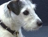 Filmhund Rocky