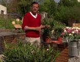 Karl Ploberger im Fernsehgarten mit Oleanderpflanzen und Blick auf die Festung.