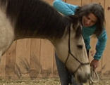 Pferdetherapie