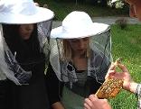 Bienenunterricht in Gleisdorf