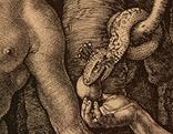 Adam und Eva von Albrecht Dürer, Ausschnitt