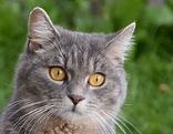 Katze Lilly in Maishofen weg