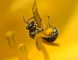 """""""Mutter Erde"""" Bienen-Schwerpunkt"""