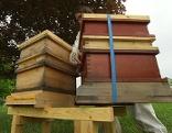 Bienenstöcke vor dem Funkhaus