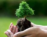Umweltschutz Baum