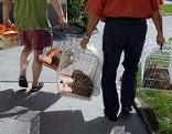 Mitarbeiter der Tierrettung transportieren Tiere