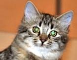 Katze Juna