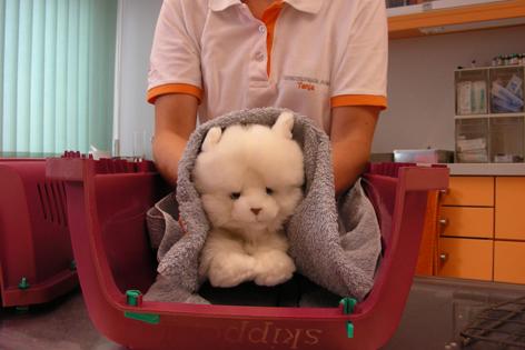 Plüschkatze in  einem Katzenkorb, sie wird mit einem Handtuch angehoben.