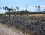 Erneuter Brand im Föhrenwald