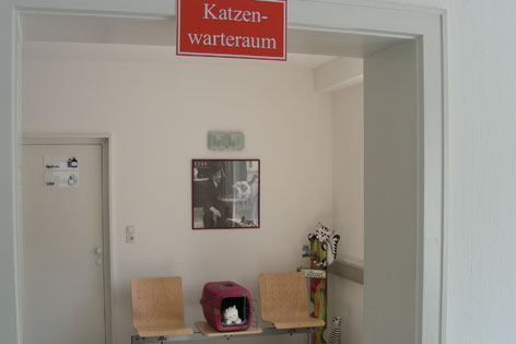 Katzenwarteraum mit erhöht abgestellter Transportbox
