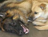 Zwei Hunde liegen am Boden