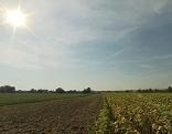 Feld im Sonnenschein