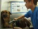 Dogwash, Hundewaschanlage