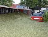 Autos unter Futtermais