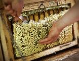 Honig aus der Wabe