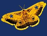 Schmetterlings-Logo der langen Nacht der Museen