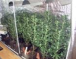Cannabis-Aufzuchtanlagen
