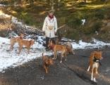 Tiersitterin Martina Kroh mit Pflegehunden