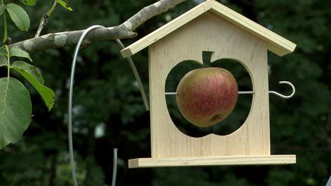 Vogelfutter Apfel